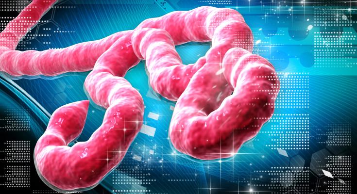 Ebola-Virus.immag.art.roby