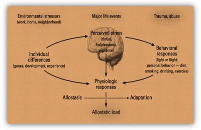 immag.omeostasi.vs.allostasi.art.dr.gatta
